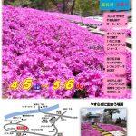 恵那峡の里芝桜祭ちらし