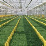 かいわれやスプラウトの水耕栽培
