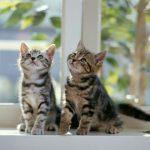 乳酸菌 ペット 猫