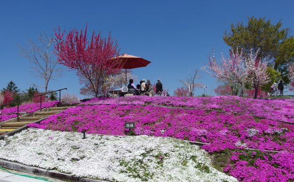 恵那峡の里 2017 芝桜