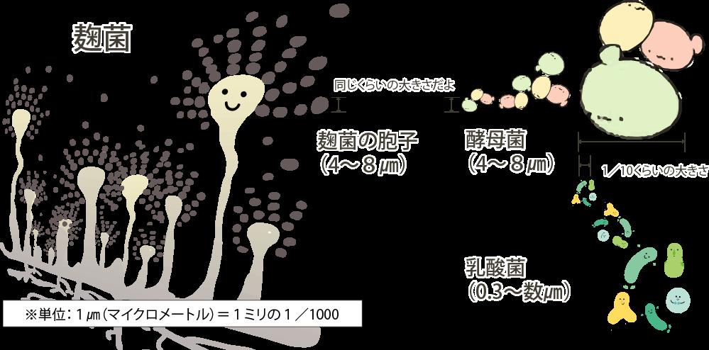 発行に係る微生物の大きさ比較